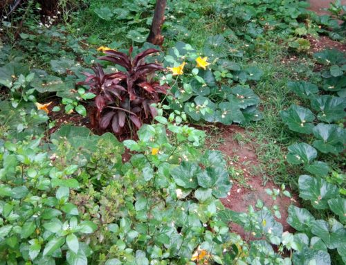 Three Easy Leafy Vegetables You and Your Children can grow in Your Terrace Garden